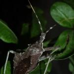 Assasin bug on the prowl