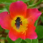 Bee pollinating a beautiful flower