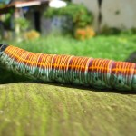 colourful caterpillar hanging out on the table