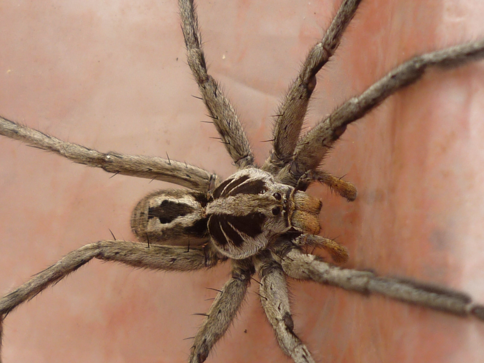 Spiders And Insects Around The World Travels