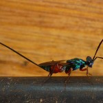 Awesome bug that gives you an electric shock