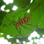 Speckled bug hanging out under a leaf