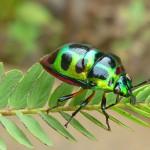 Luminous Beetle on Leaf