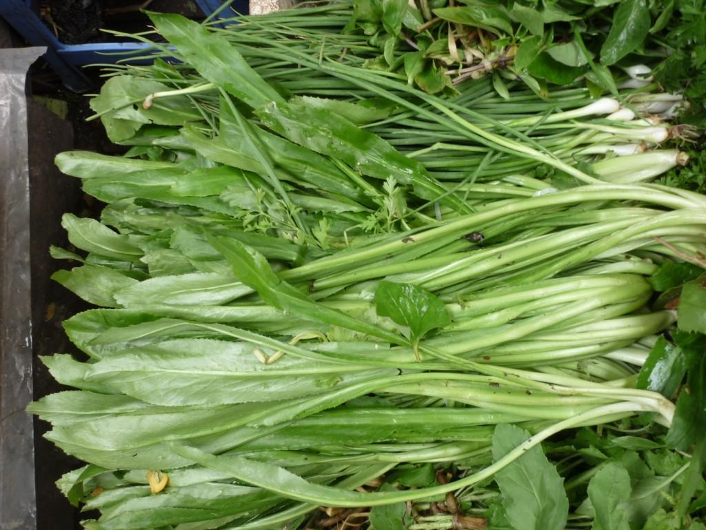 Sawleaf herb