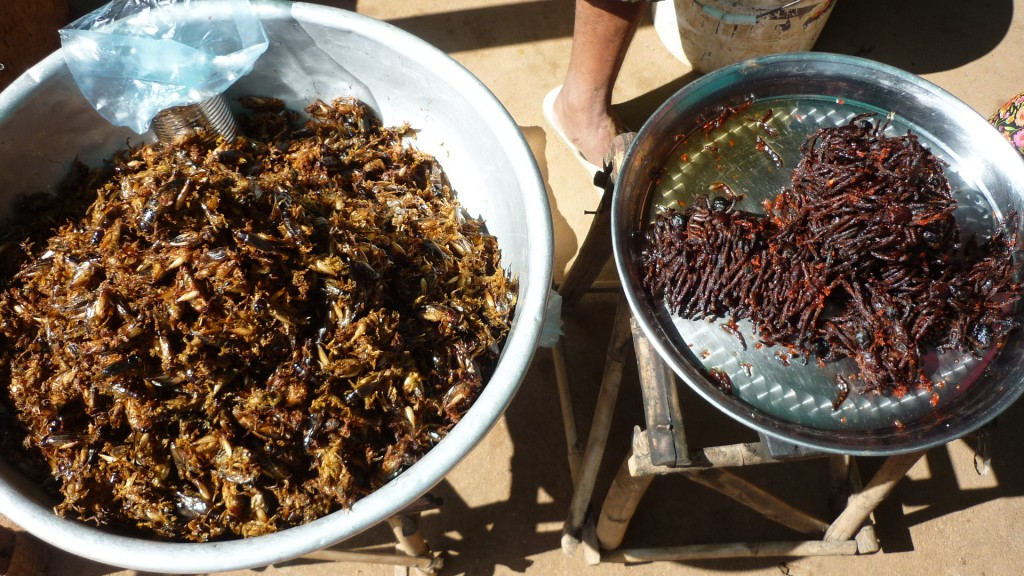 Fried tarantula and cricket