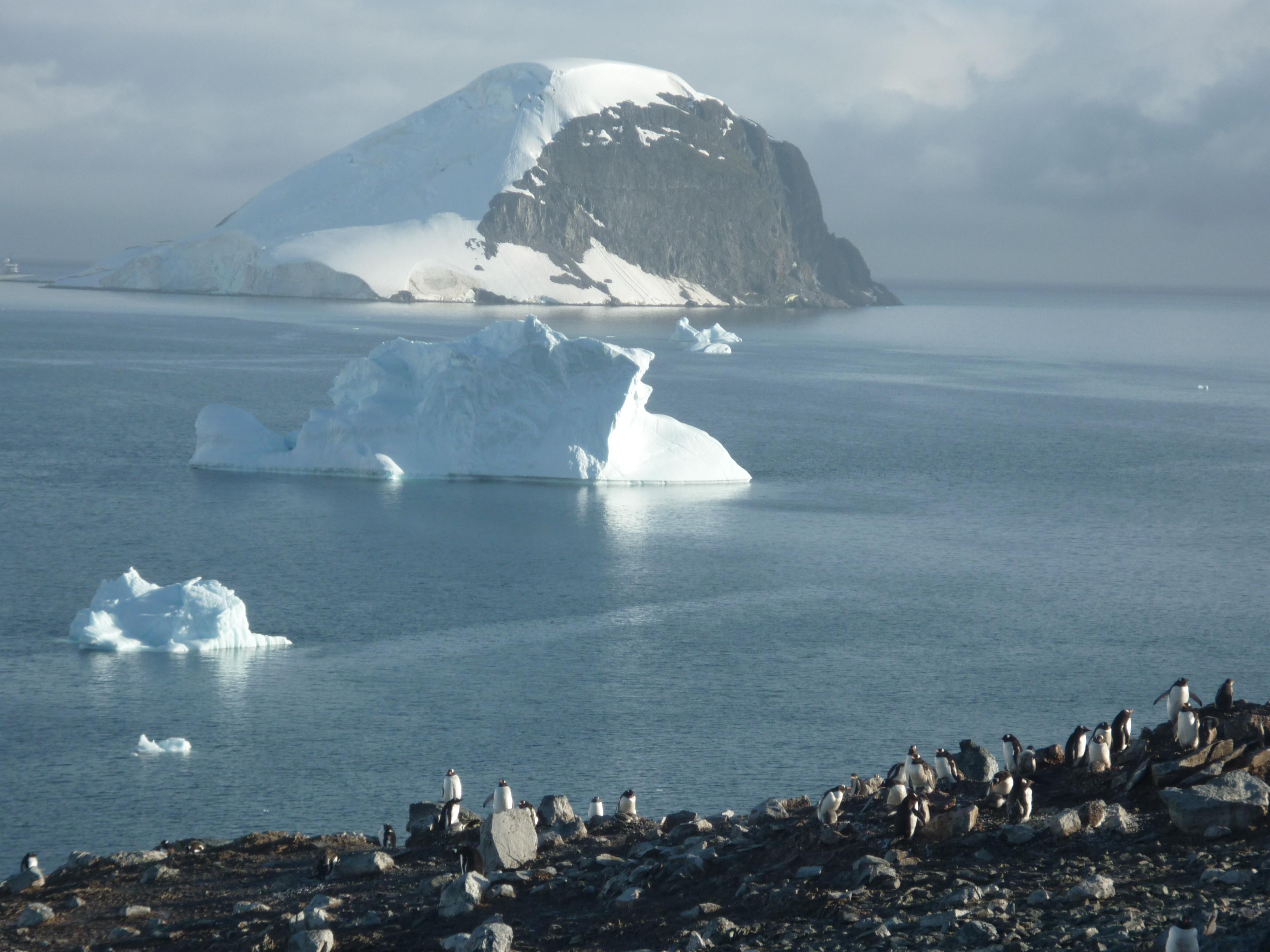Local dishes in antarctica for Antarctica cuisine