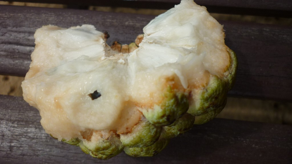 Custard Apple Exotic Fruit