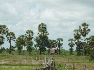 Hut in rice paddy field on Cambodia Laos boarder
