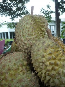 Jackfruit exotic fruit