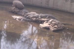 crocodile pit