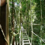 Tree walkways in the jungle outside Kuala Lumpar