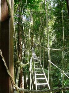 Tree walkways in the jungle outside Kuala Lumpar